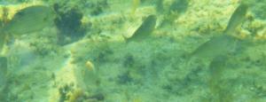 vie marine mediteranée côte bleue